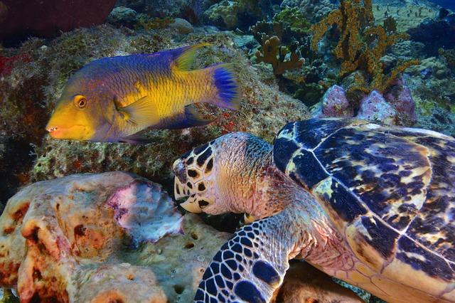 želva a ryba.jpg