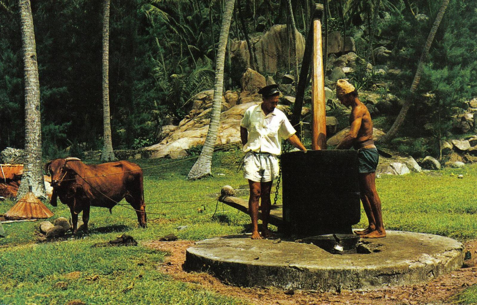 starý lis na kokosový ole